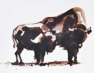 bisons - Anita Gaasbeek
